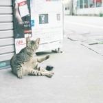 ローカリゼーションマップ勉強会