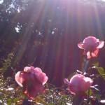 旧古川庭園に行ってきたときの写真